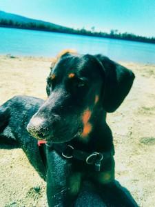 Dom, notre compagnon qui vivra une vrai vie de chien!